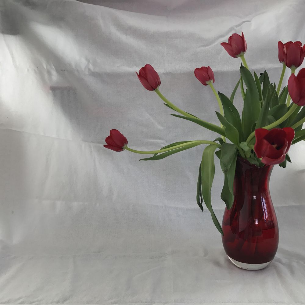 Red Tulips - image 2 - student project