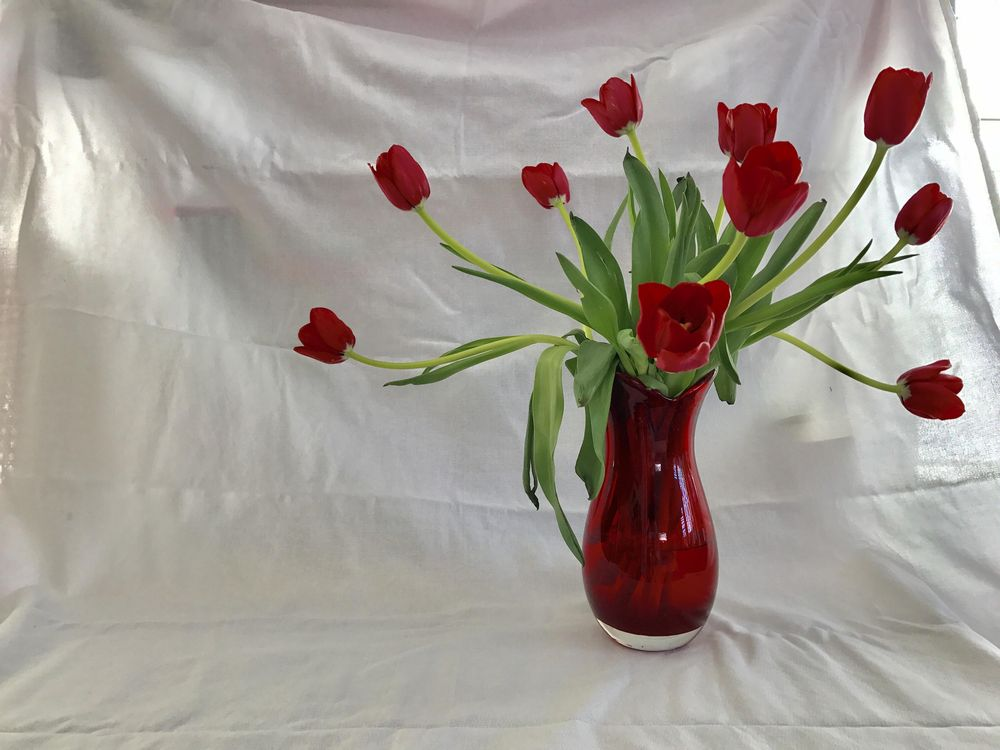 Red Tulips - image 1 - student project