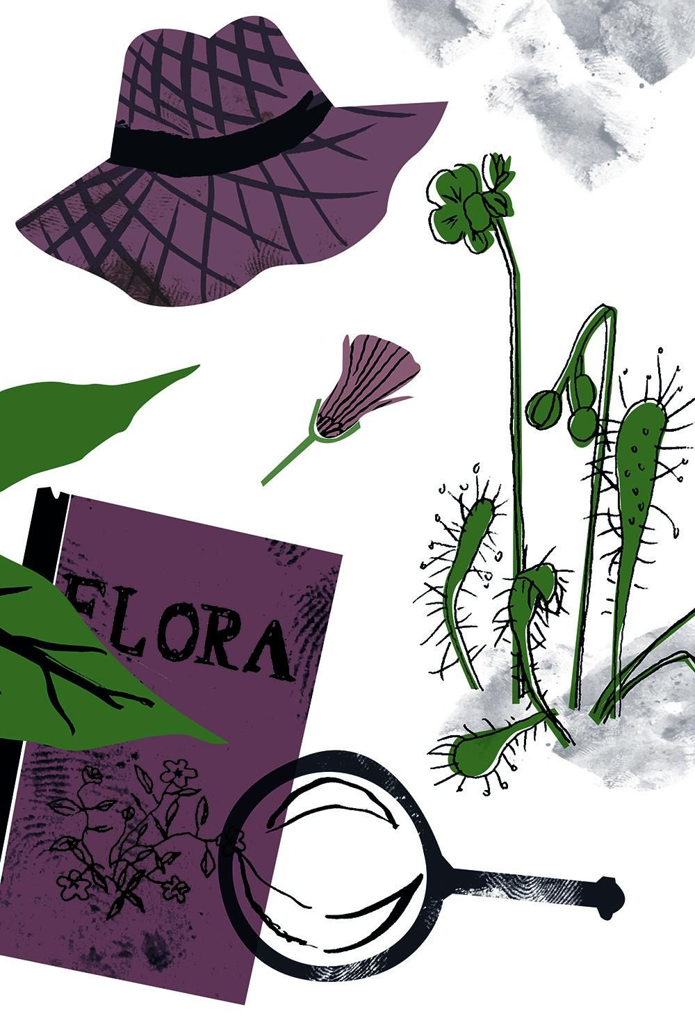 Tools of a botanist - image 3 - student project
