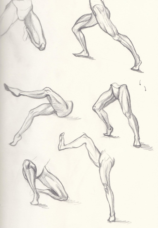 leg anatomy - image 3 - student project