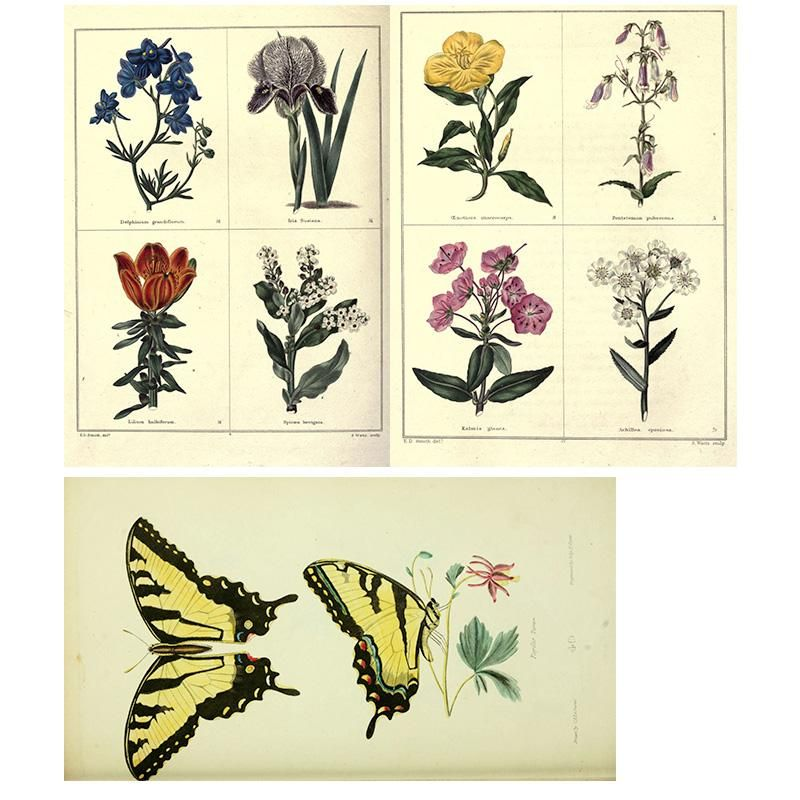 Flowers & Butterflies - image 1 - student project