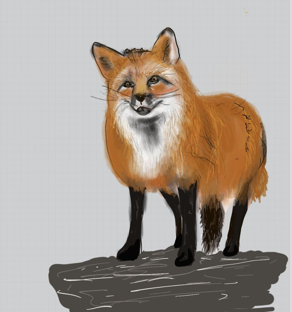 Fox using the Shape Method - image 1 - student project