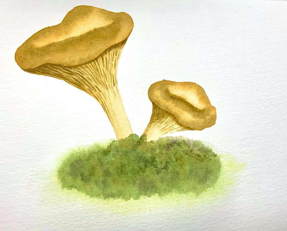 Chanterelle - image 1 - student project