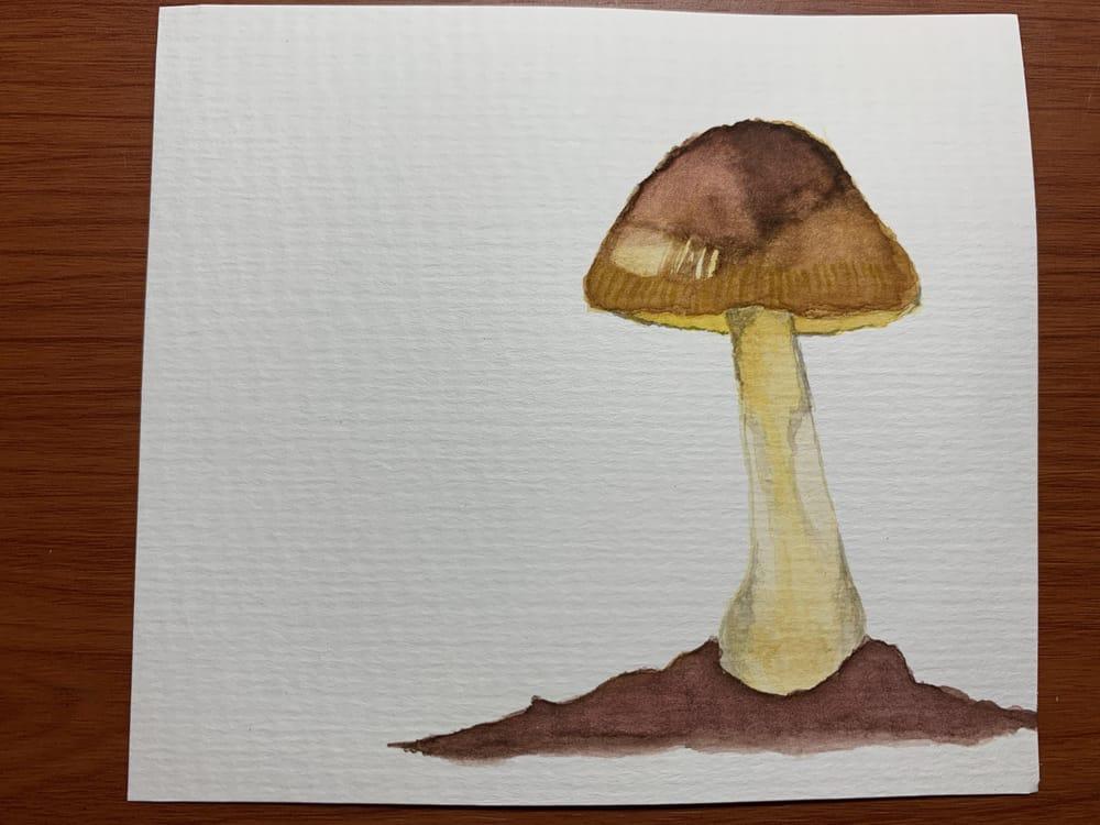 Mushrooms - image 1 - student project