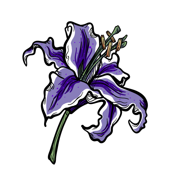 Lily exercise - image 1 - student project