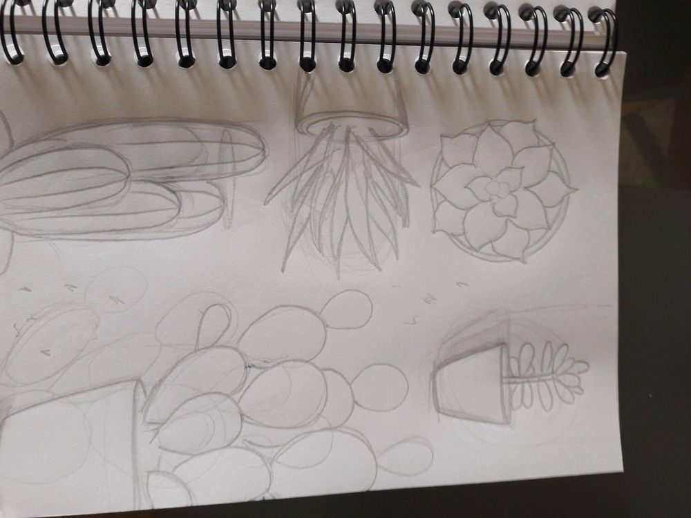 Cactus and indoor plants - image 1 - student project