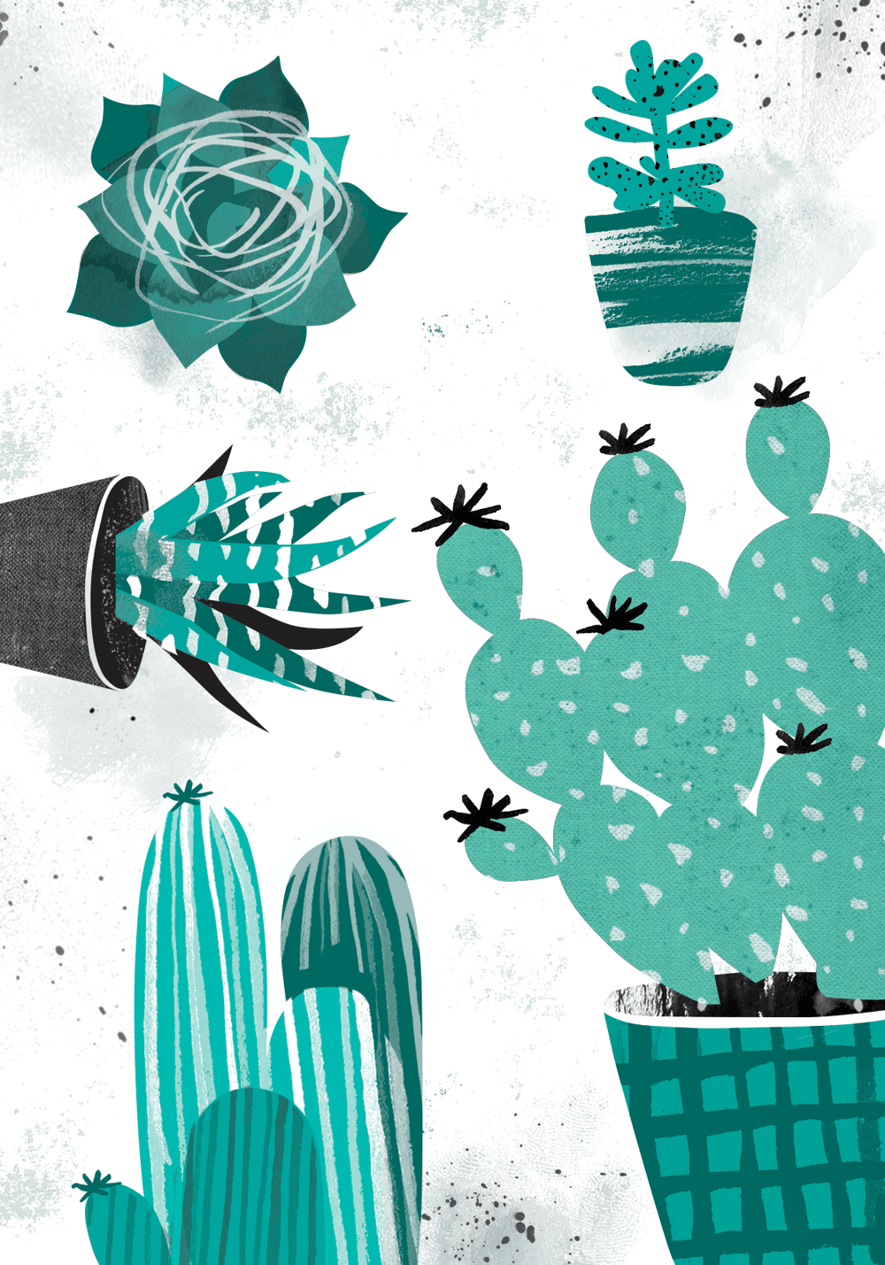 Cactus and indoor plants - image 3 - student project