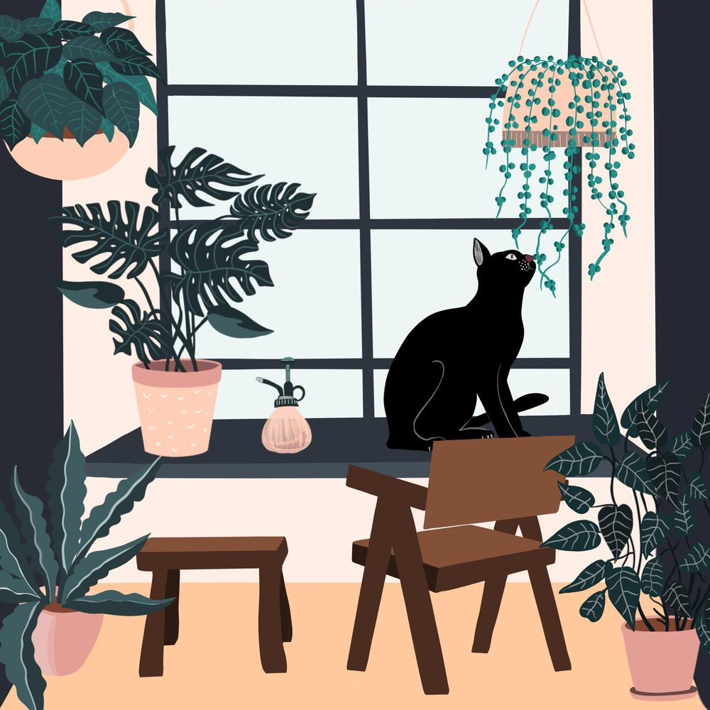 Cats and plants! - image 1 - student project