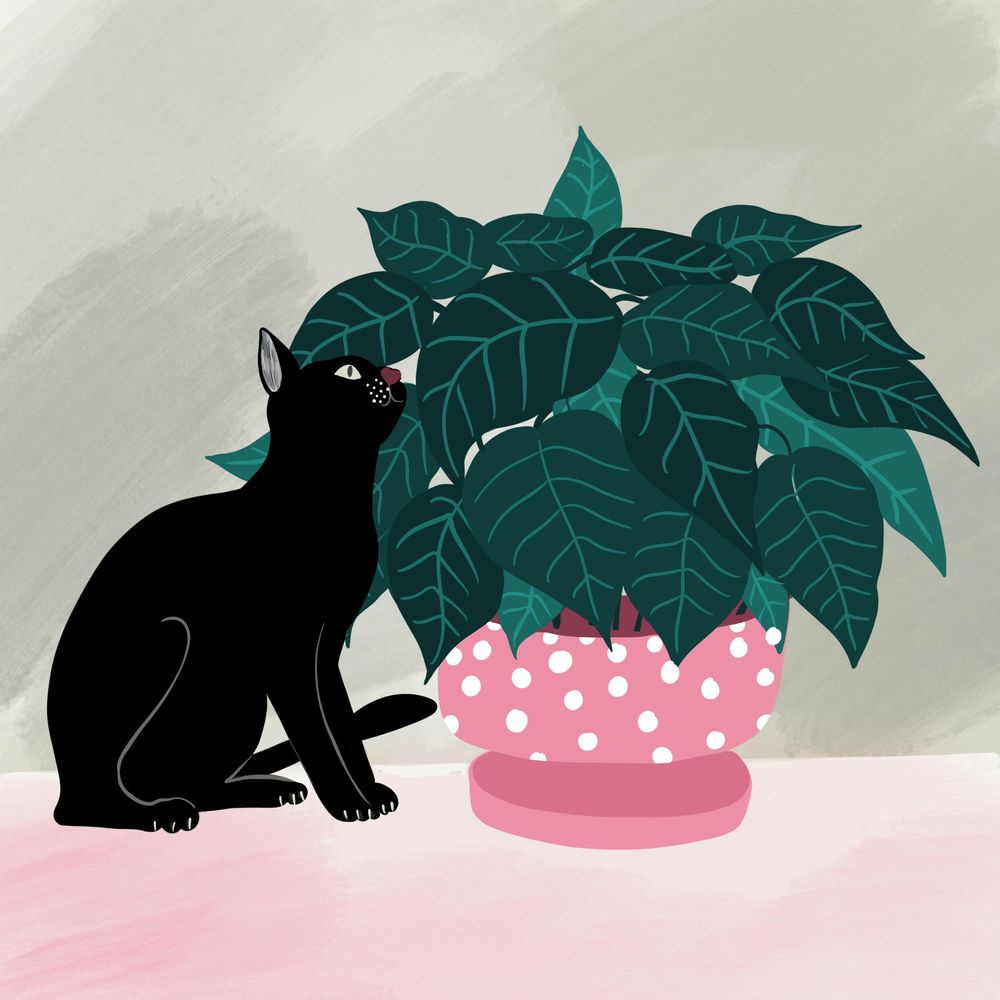 Cats and plants! - image 2 - student project