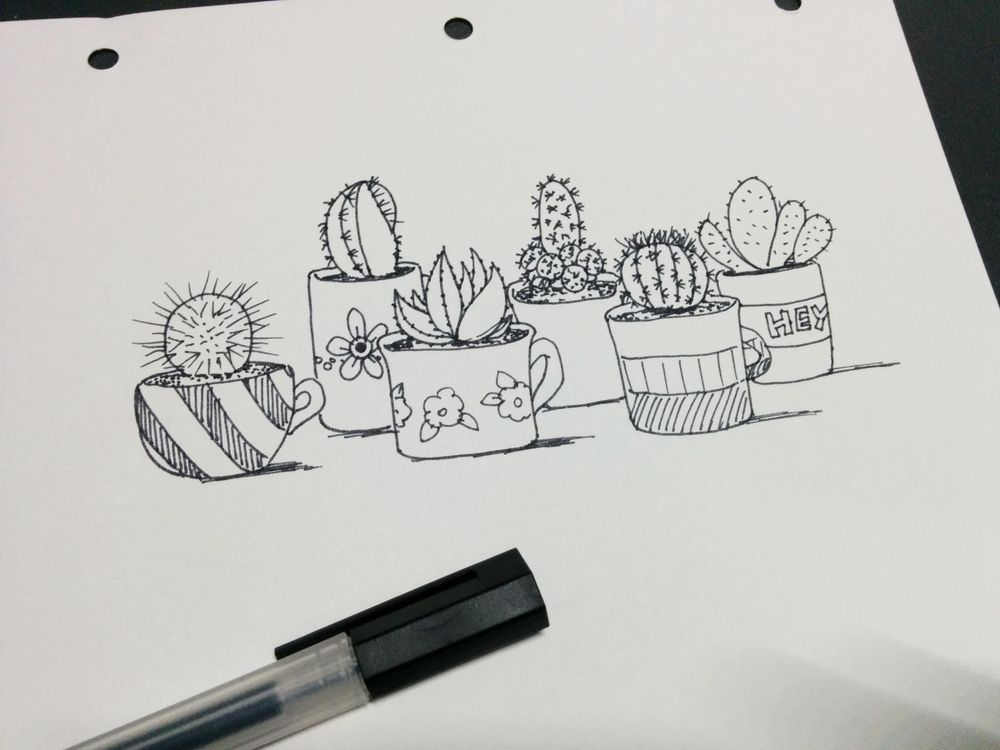 Cacti and succulents - image 1 - student project