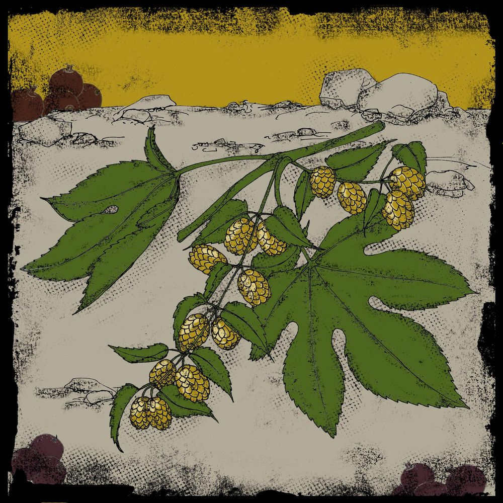 Brewers Gold - image 1 - student project