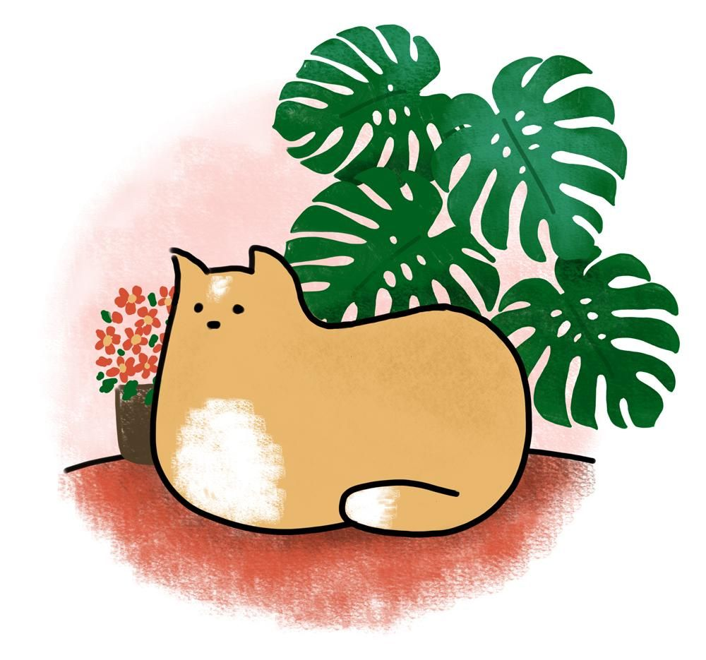 Kitty loves the plants - image 6 - student project
