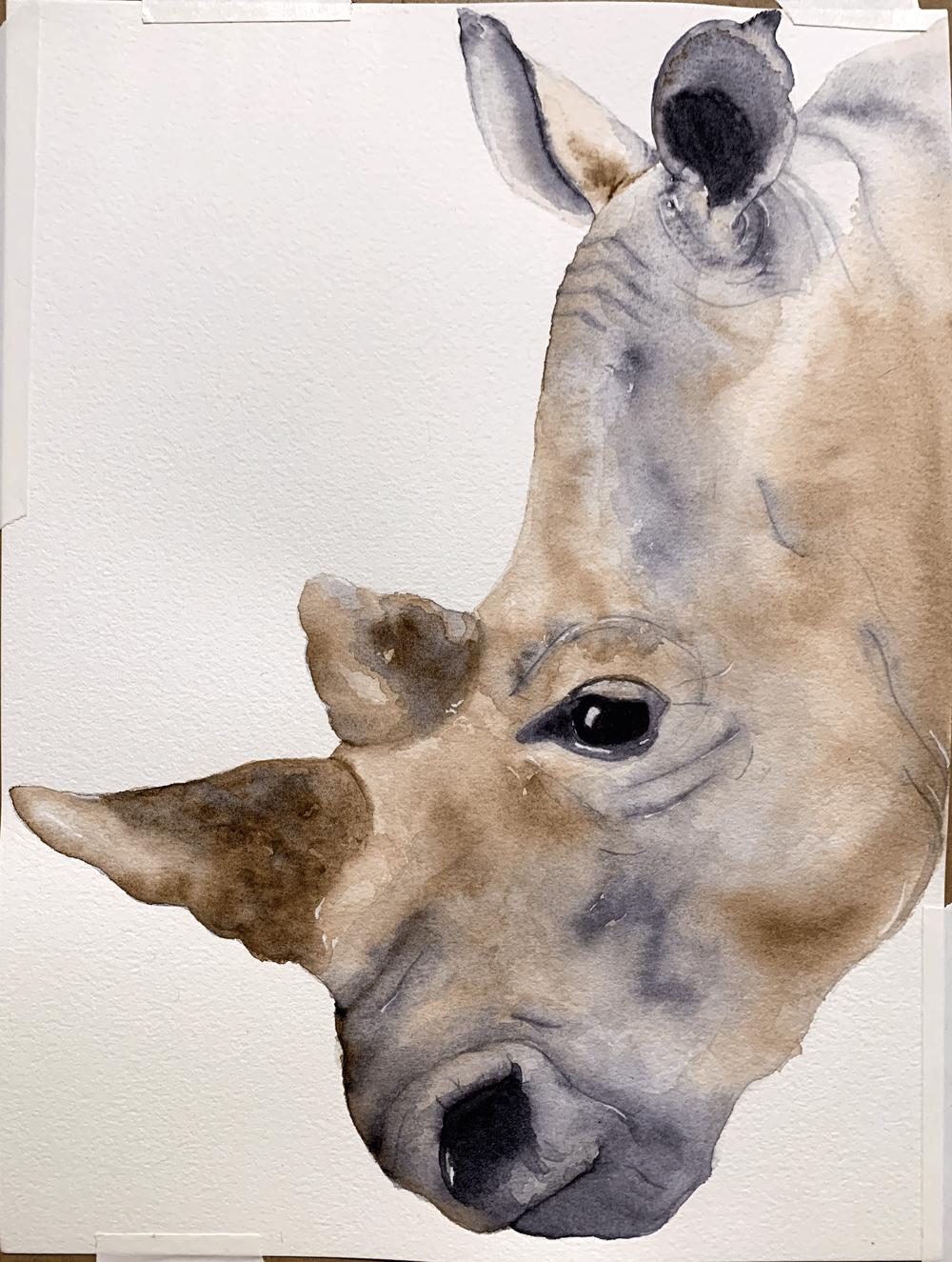 White Rhino - image 1 - student project