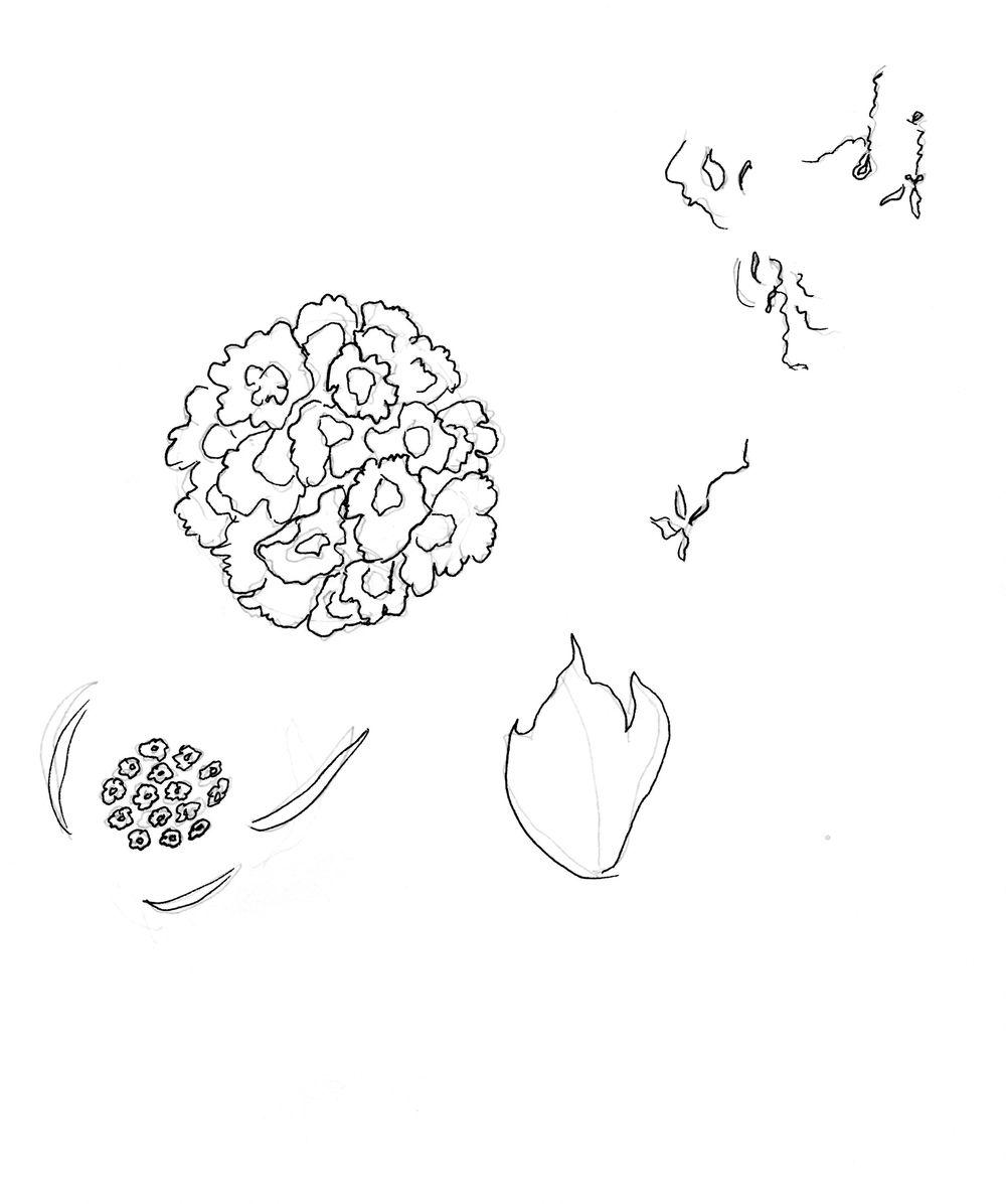 Asian Tropics - image 12 - student project