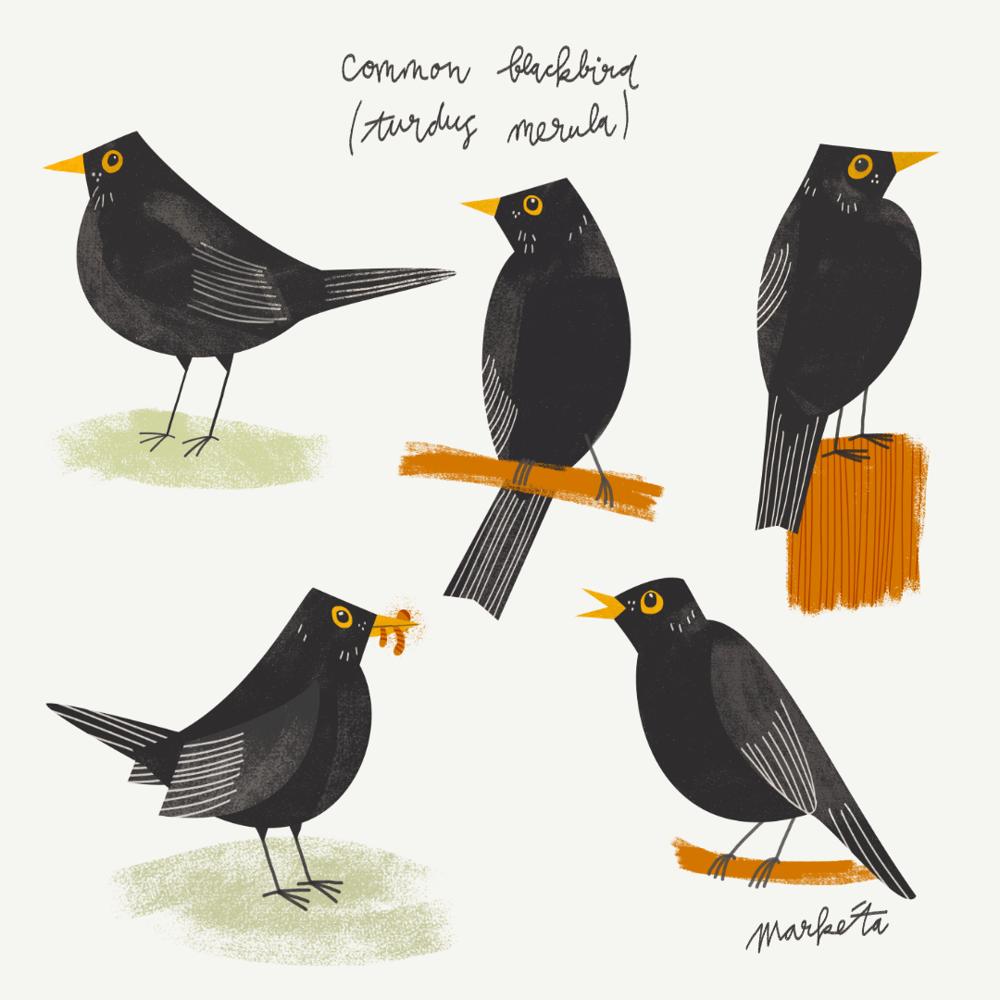 Blackbird - image 1 - student project