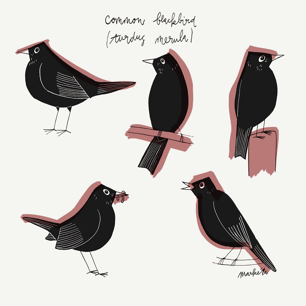 Blackbird - image 2 - student project