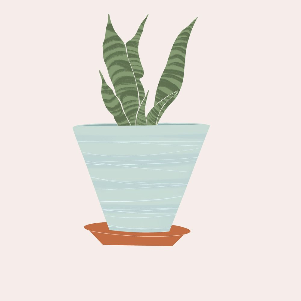 My Snake plant:) - image 1 - student project