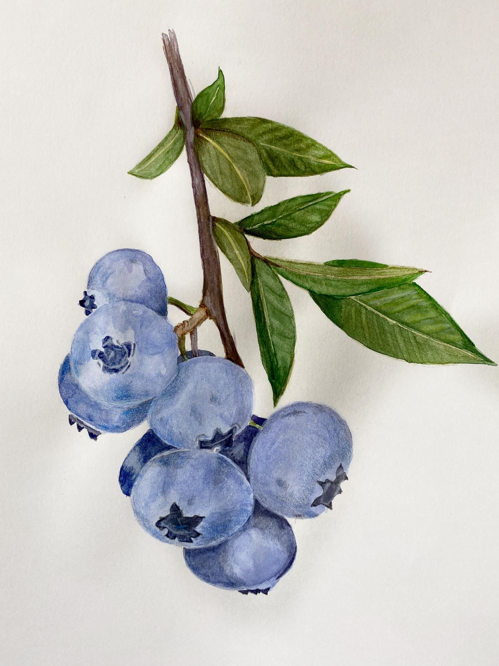 Blueberries - image 1 - student project