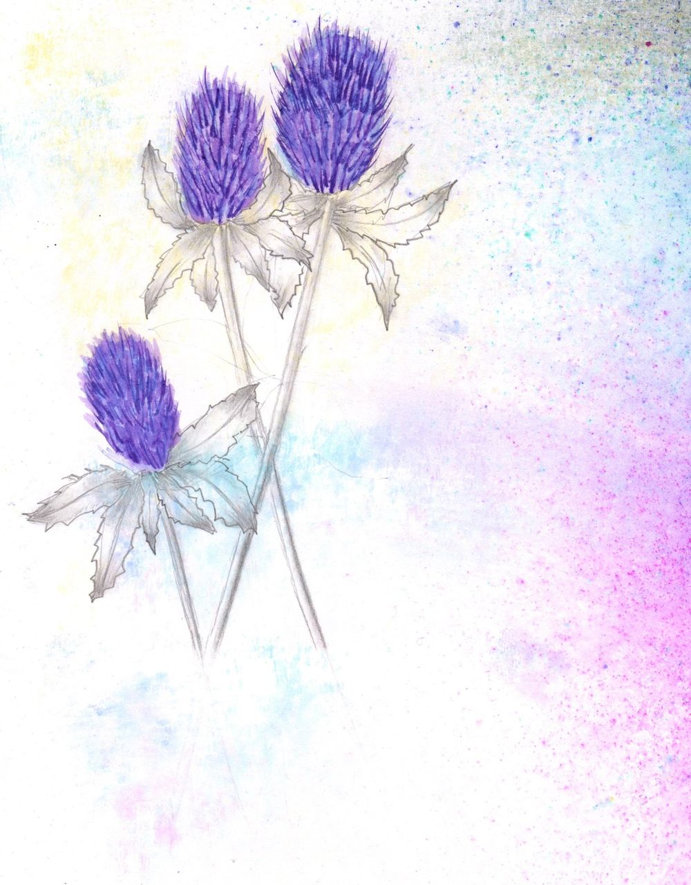 Daisies & Thistles - first intentions - image 2 - student project