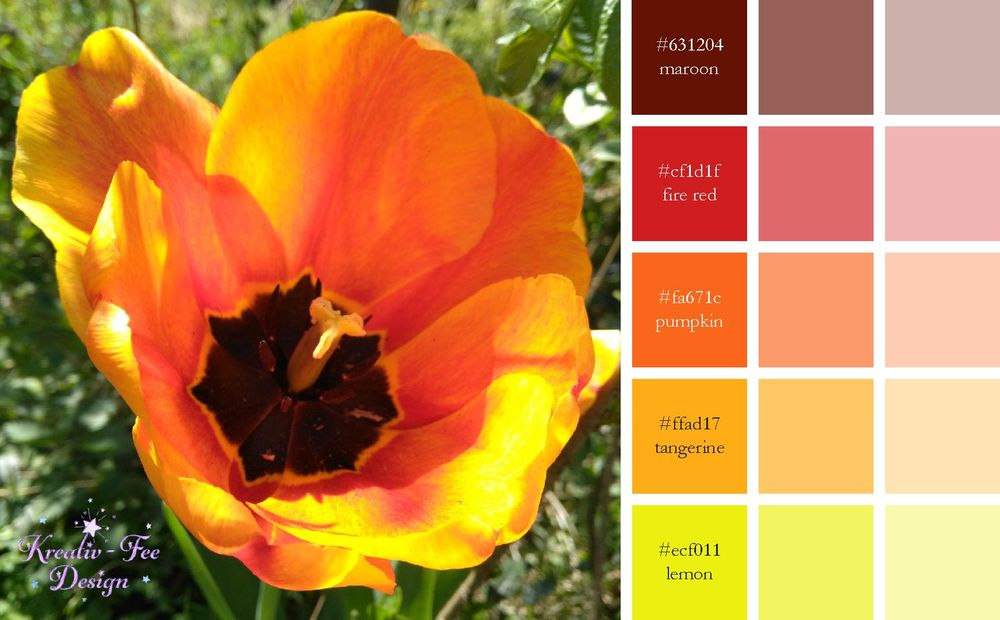 Tulip color scheme - image 2 - student project