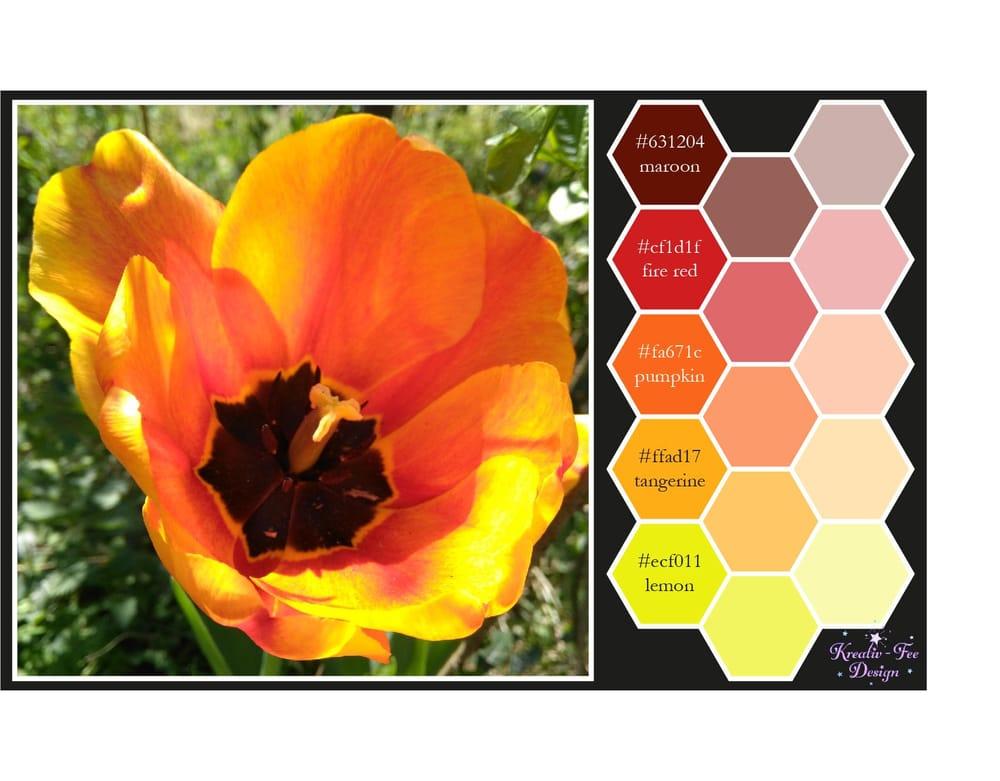 Tulip color scheme - image 1 - student project