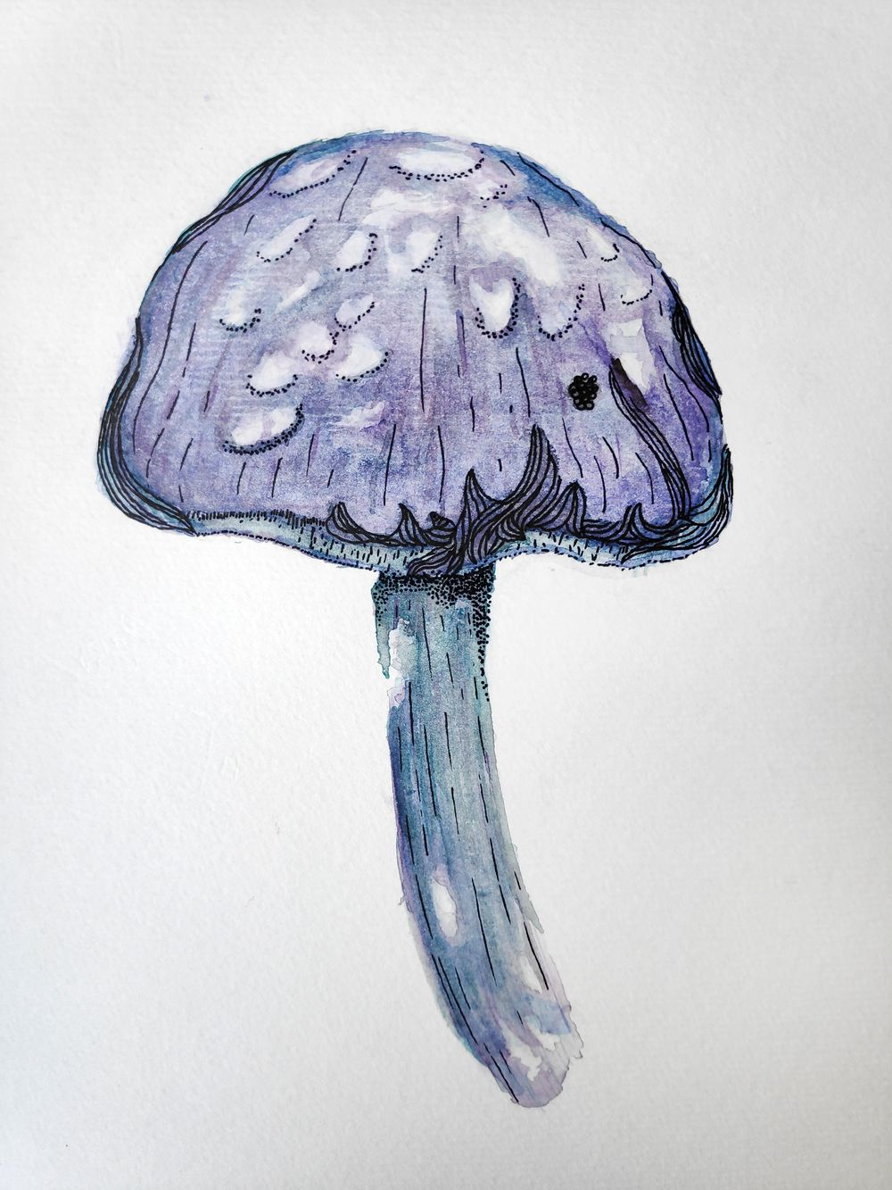 The mushroom and the fern! - image 1 - student project
