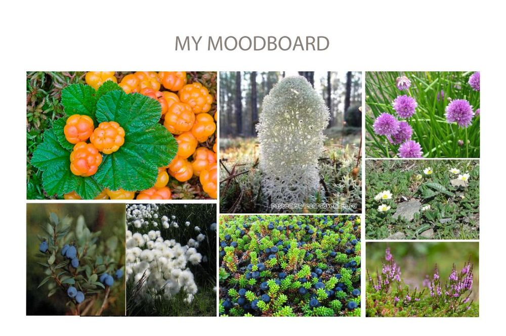 Cloudberry season - image 1 - student project