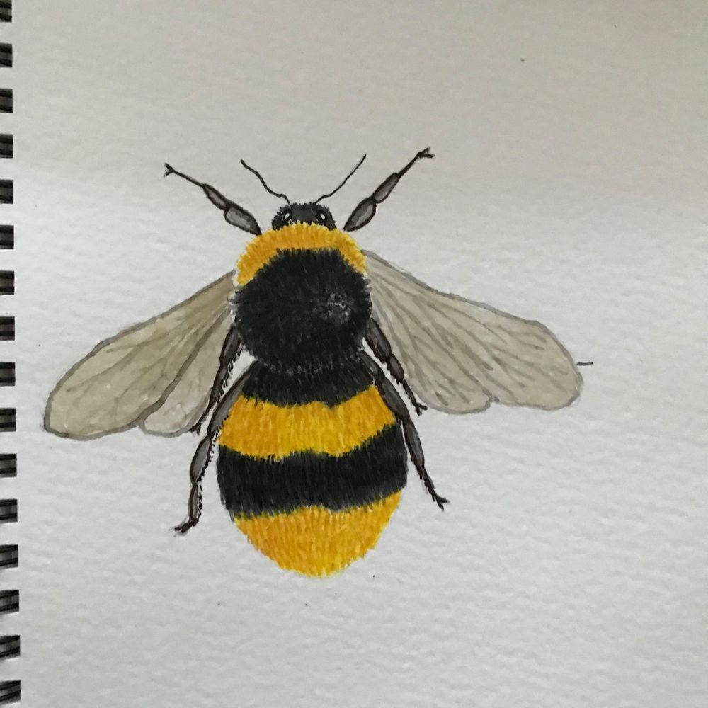 Painting Bees in watercolour - image 2 - student project