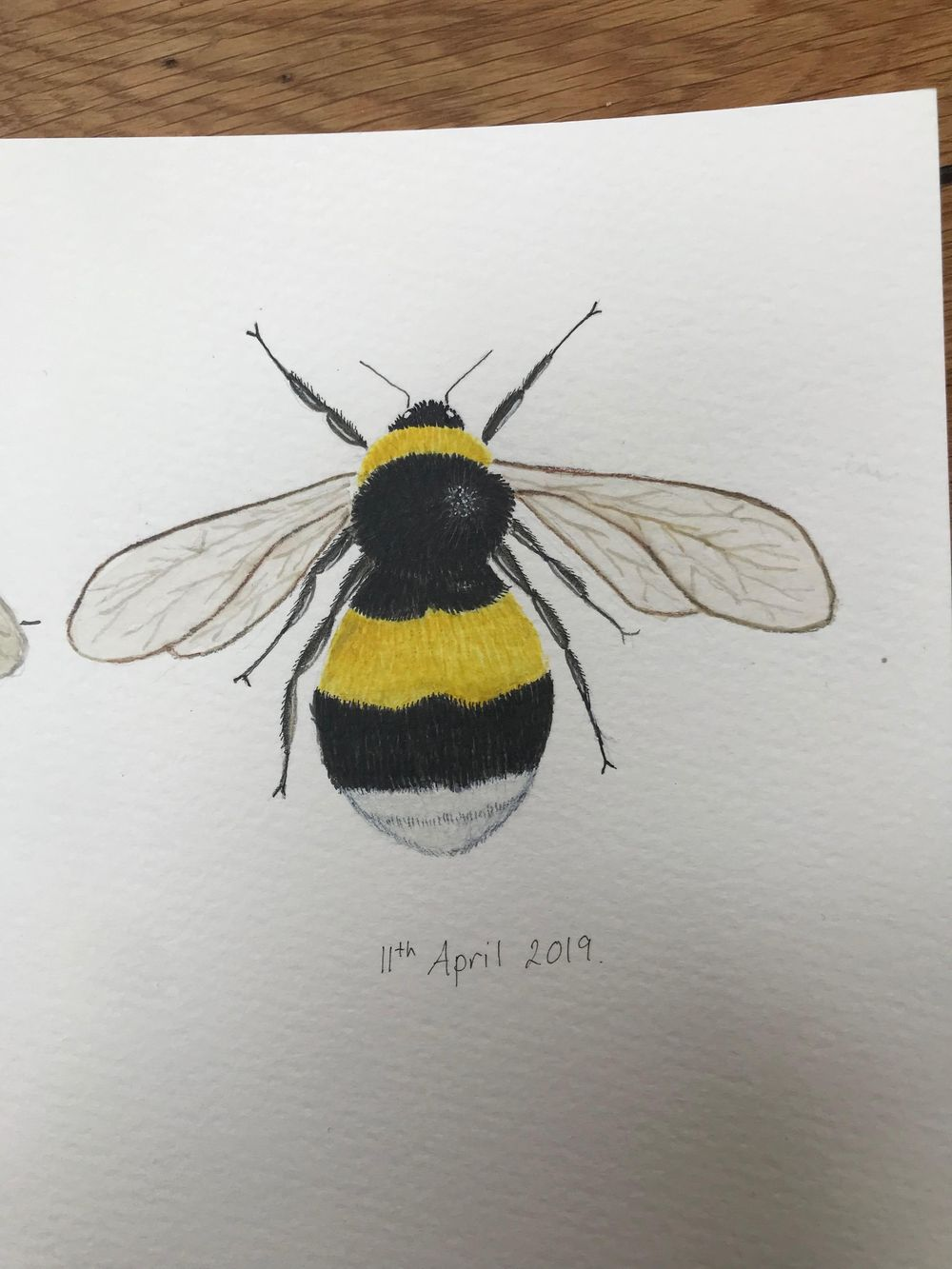 Painting Bees in watercolour - image 3 - student project