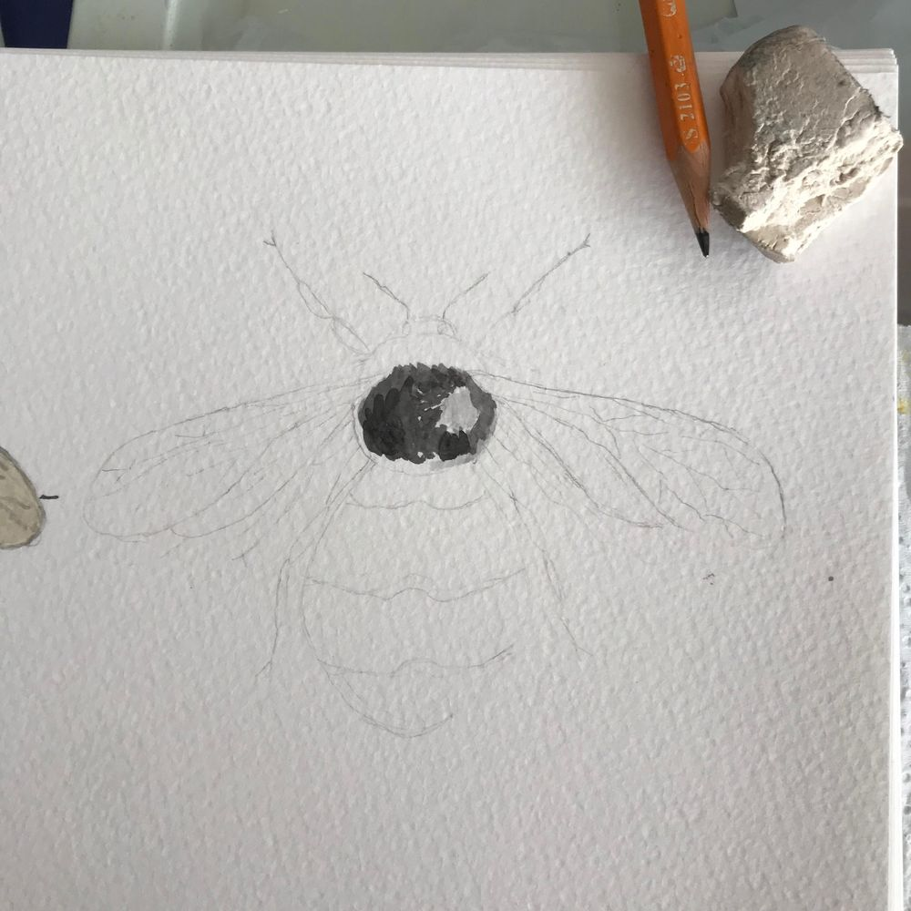 Painting Bees in watercolour - image 1 - student project