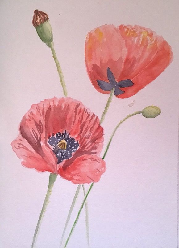 Poppies and Dahlias - image 3 - student project