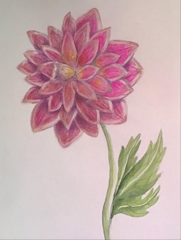 Poppies and Dahlias - image 2 - student project