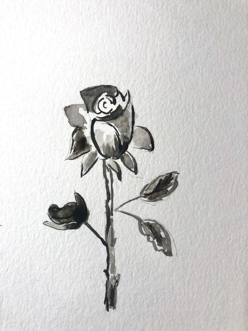 Starting a botanical sketchbook - image 2 - student project
