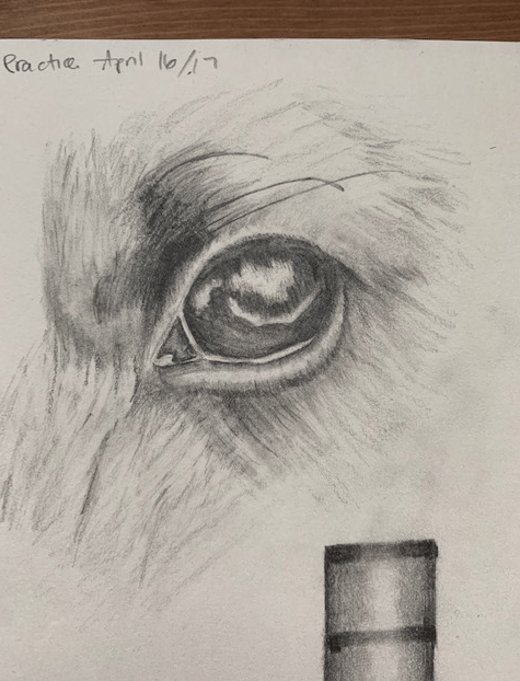 Dog Eye Drawing - image 1 - student project