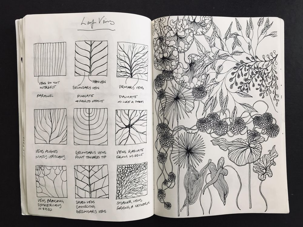 Drawing Plants & Leaves - image 2 - student project
