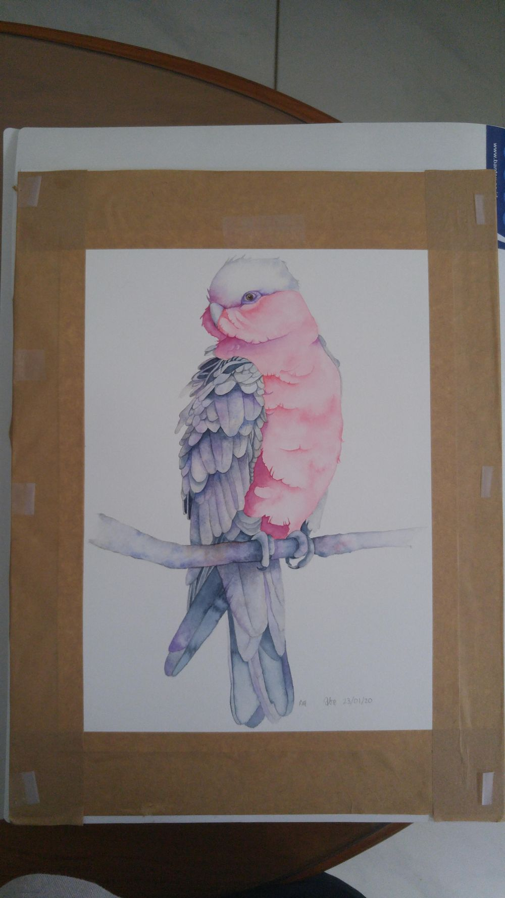 Louise's Galah by Avi - image 1 - student project