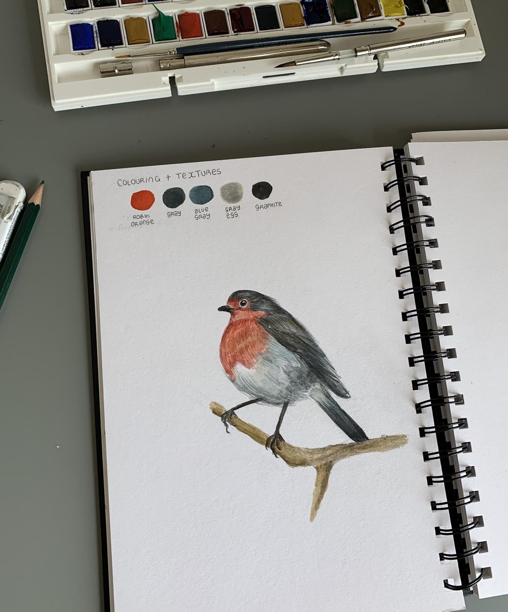 Drawing and painting a robin - image 2 - student project