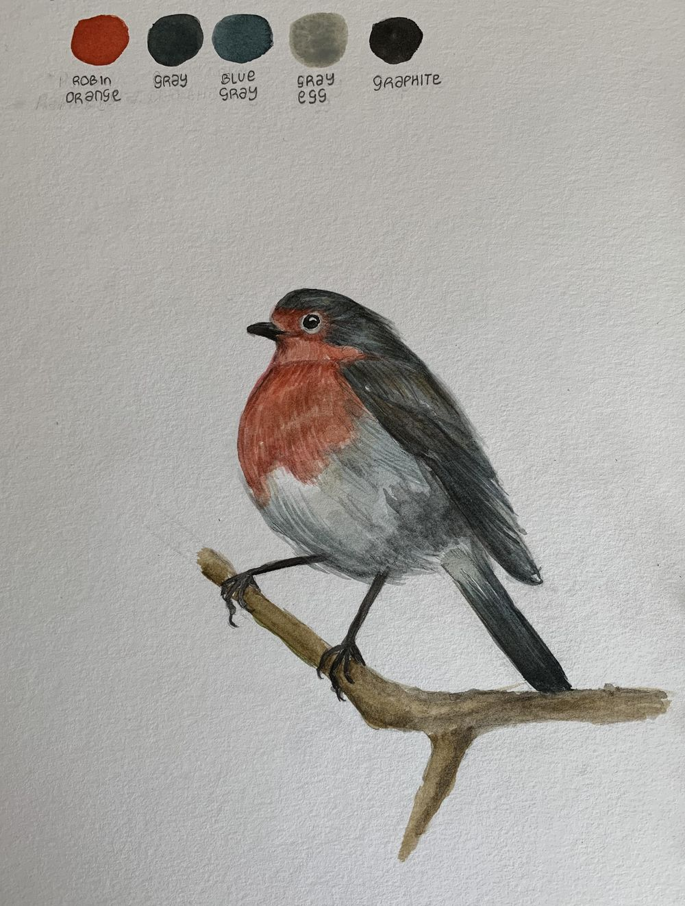Drawing and painting a robin - image 3 - student project