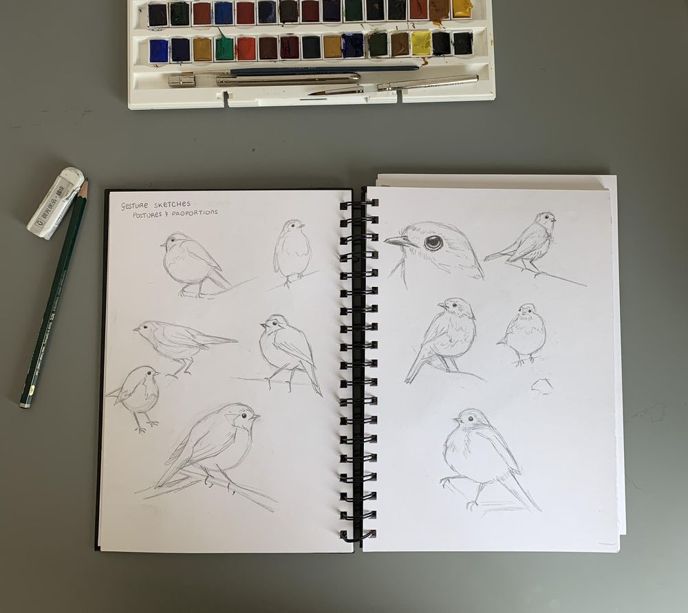 Drawing and painting a robin - image 1 - student project