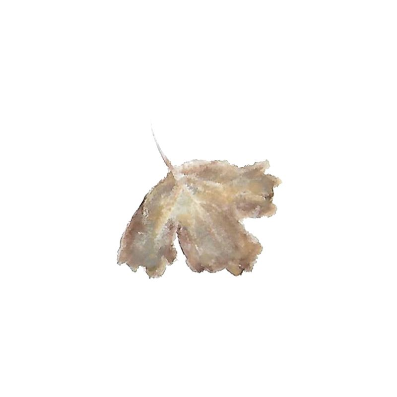Leaf selections - image 3 - student project