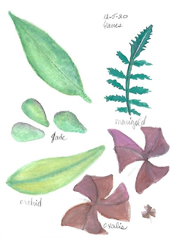 Watercolor leaves - image 1 - student project