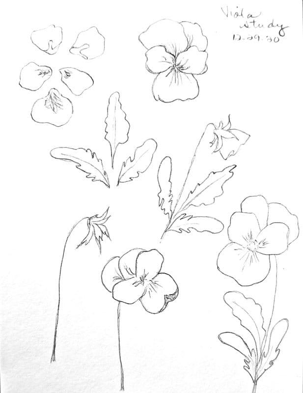 Viola study - image 1 - student project