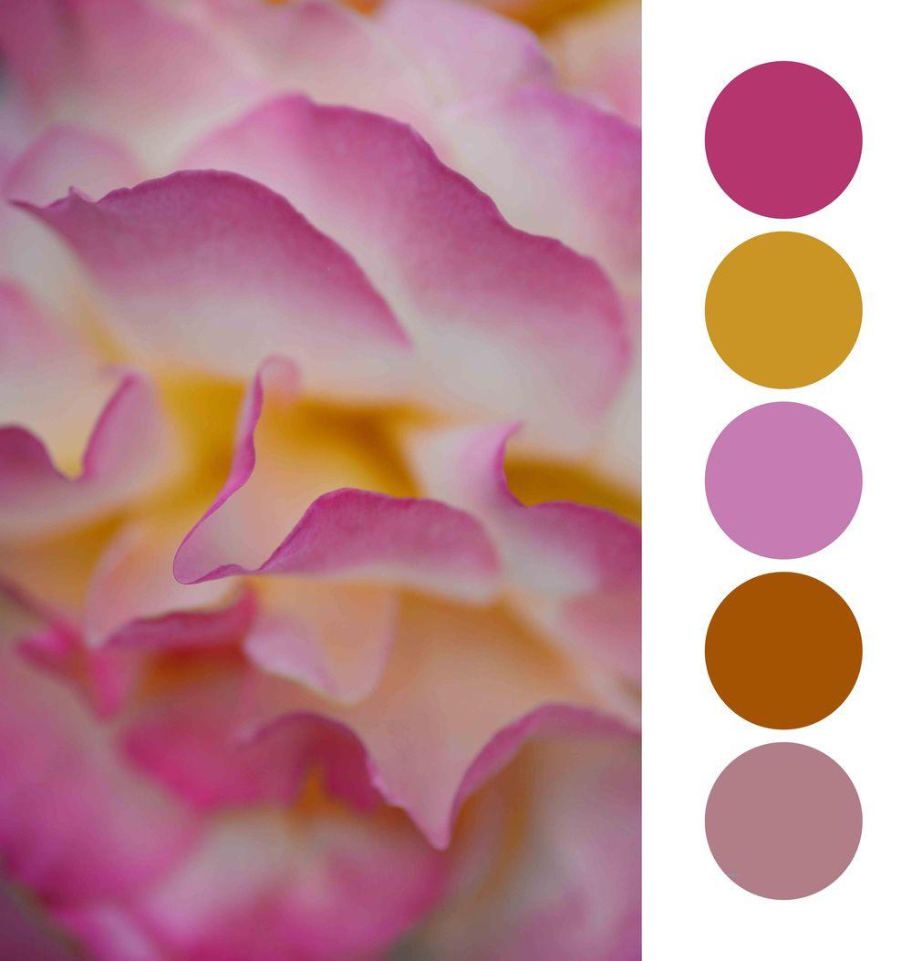 Flower Colour palette - image 2 - student project