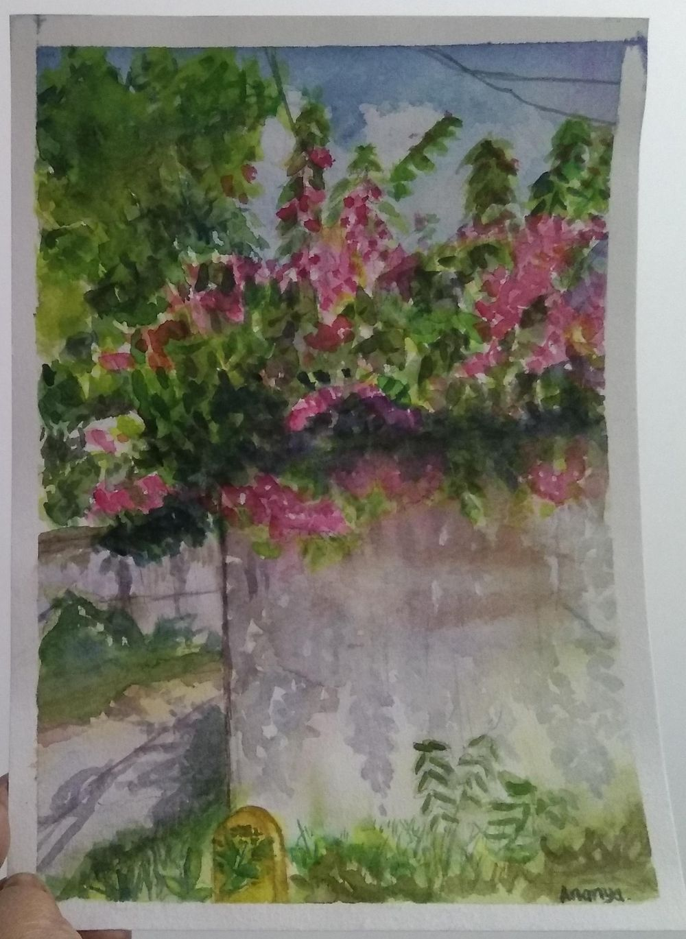 Bougainvillea on a hot summer day - image 1 - student project