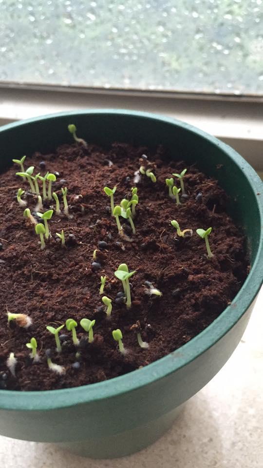 Indoor Vegetable garden - image 3 - student project