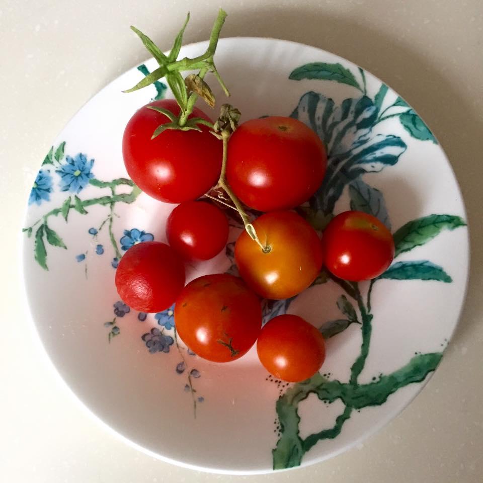 Indoor Vegetable garden - image 5 - student project