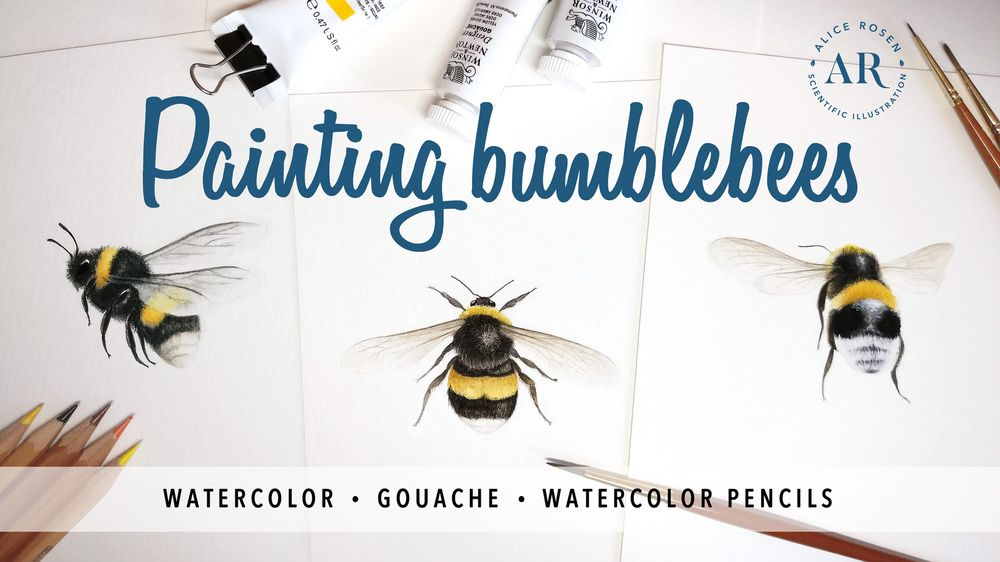 [PUBLISHED] Painting Bees in Watercolor, Gouache & Watercolor Pencils - image 1 - student project