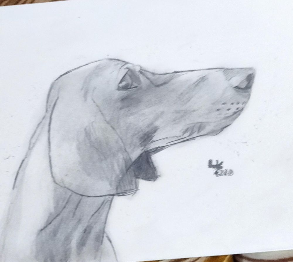 Dachshund and Labrador drawing - image 2 - student project