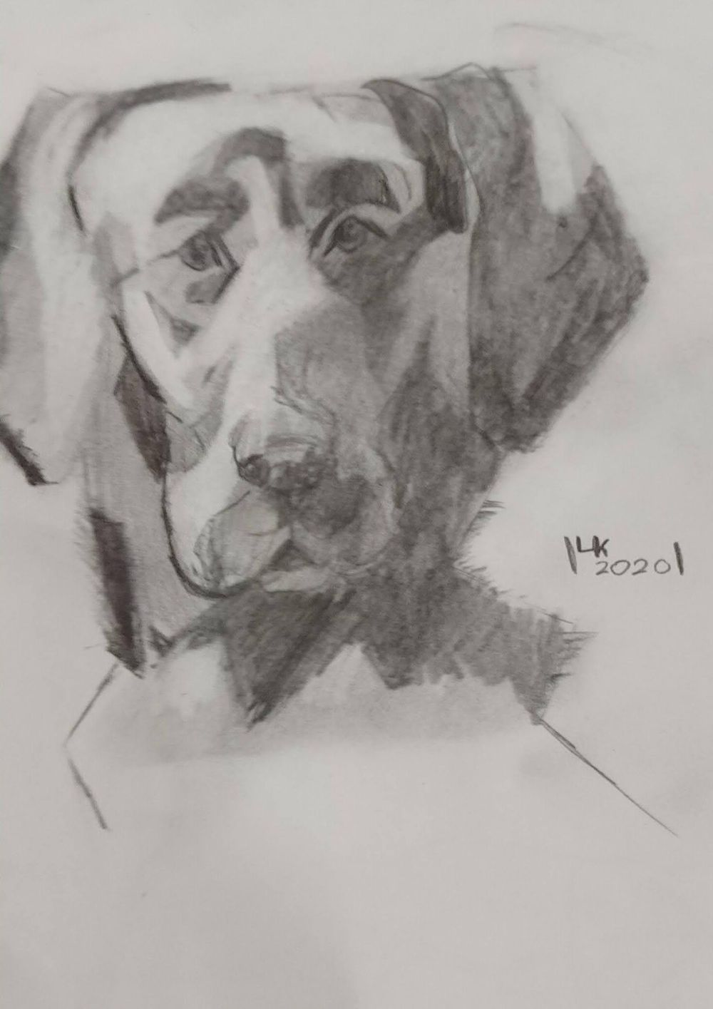 Dachshund and Labrador drawing - image 1 - student project
