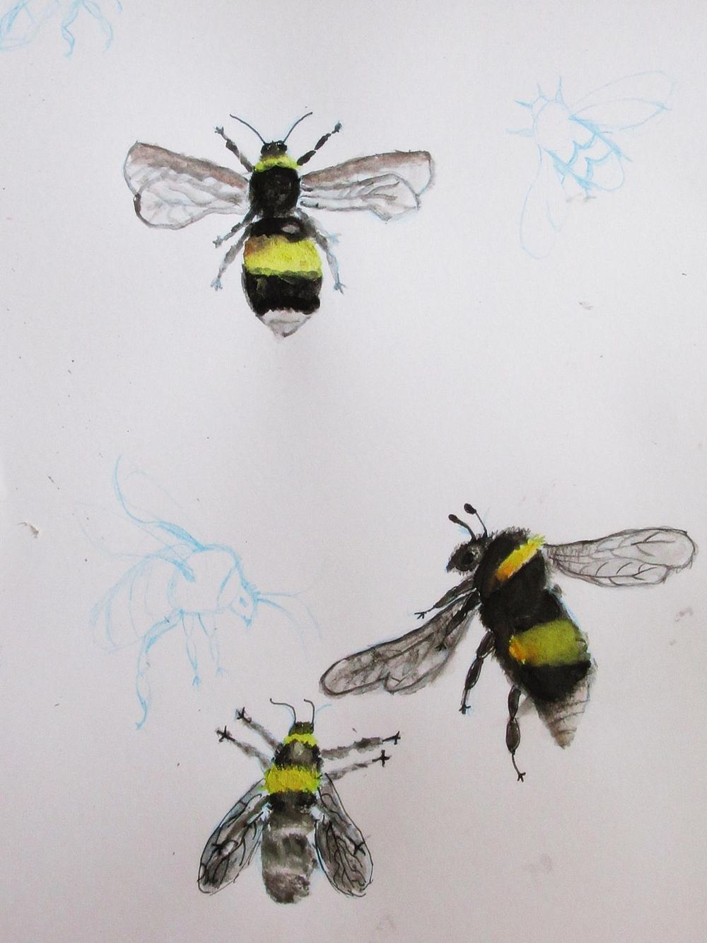 bumblebee - image 1 - student project